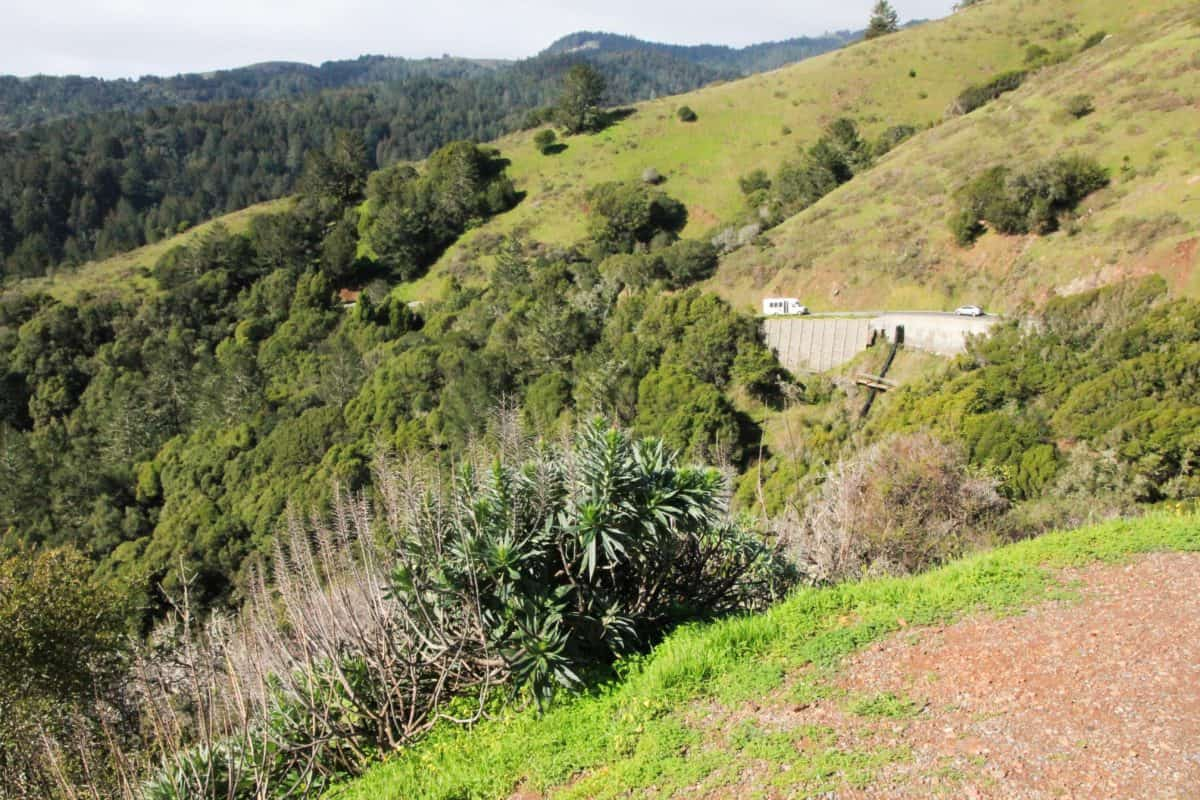 Look outs - Tips for Visiting Muir Woods National Monument