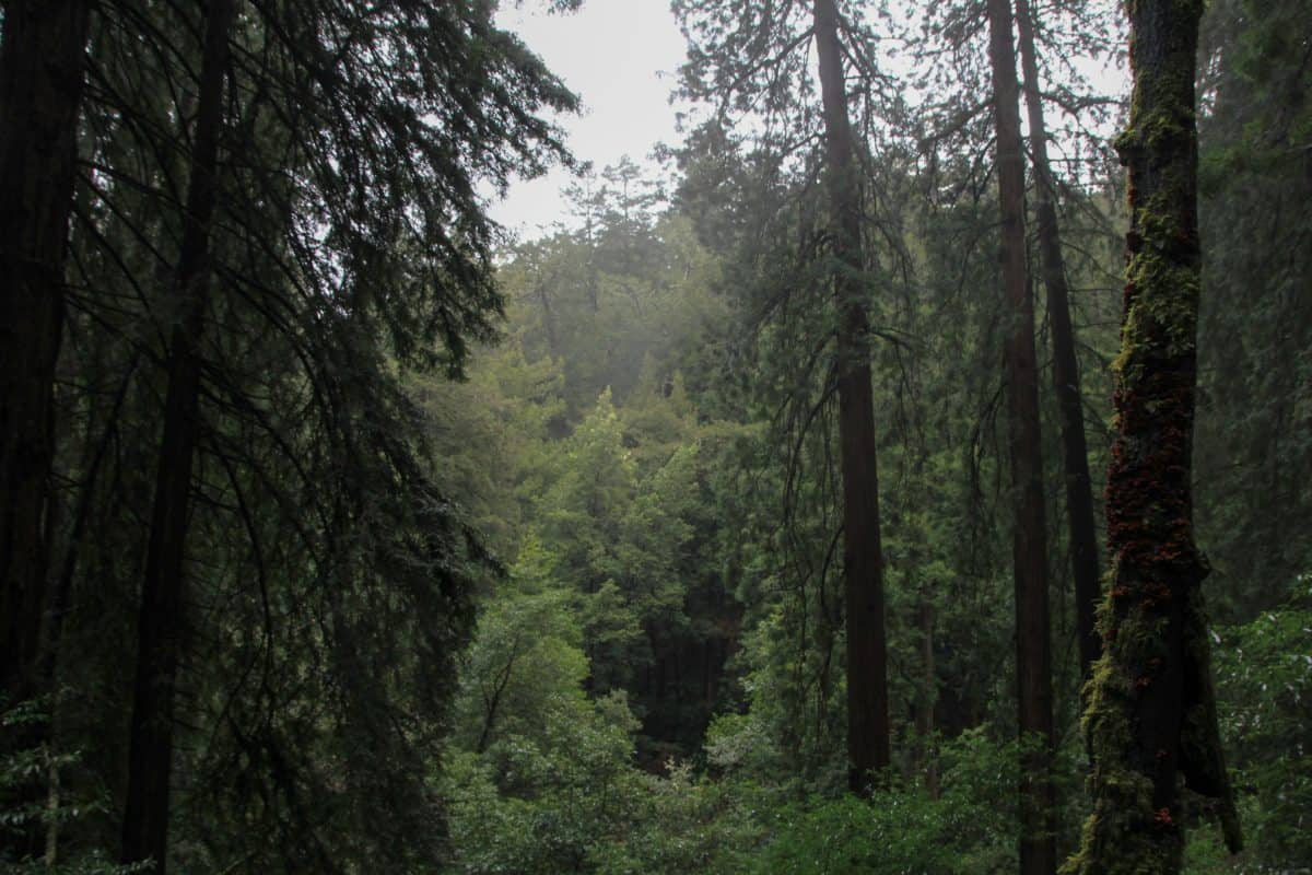 Tips for Visiting Muir Woods National Monument