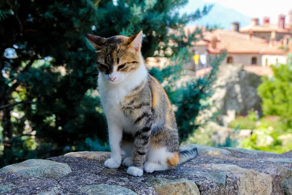 Cats in front of St. Stephen's Monastery at the Meteora Monasteries