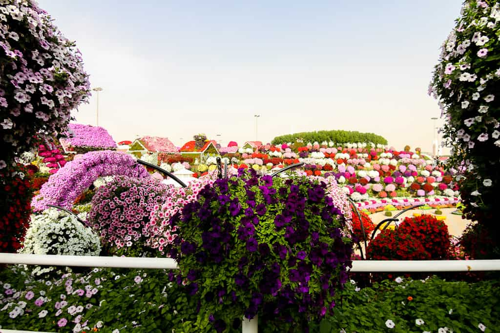 Flowers at the Dubai Miracle Garden