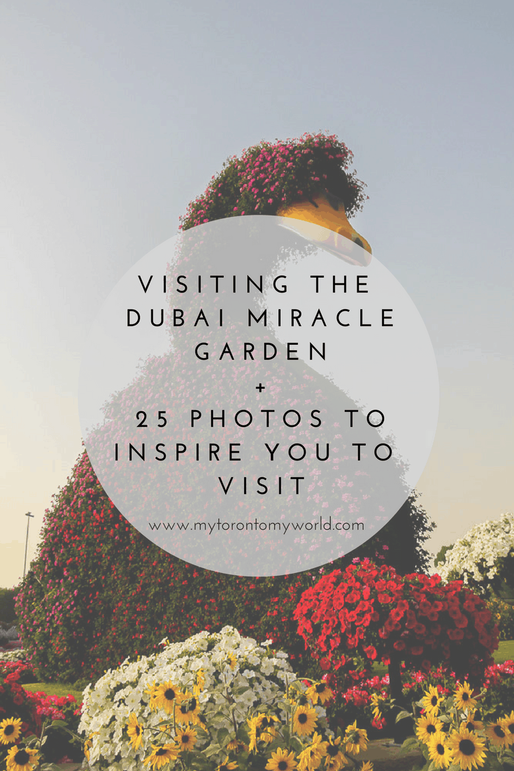 Everything you need to know to visit the Dubai Miracle Garden including admission, hours, entrance and how to get there. Plus lots of photographs to motivate you to visit!