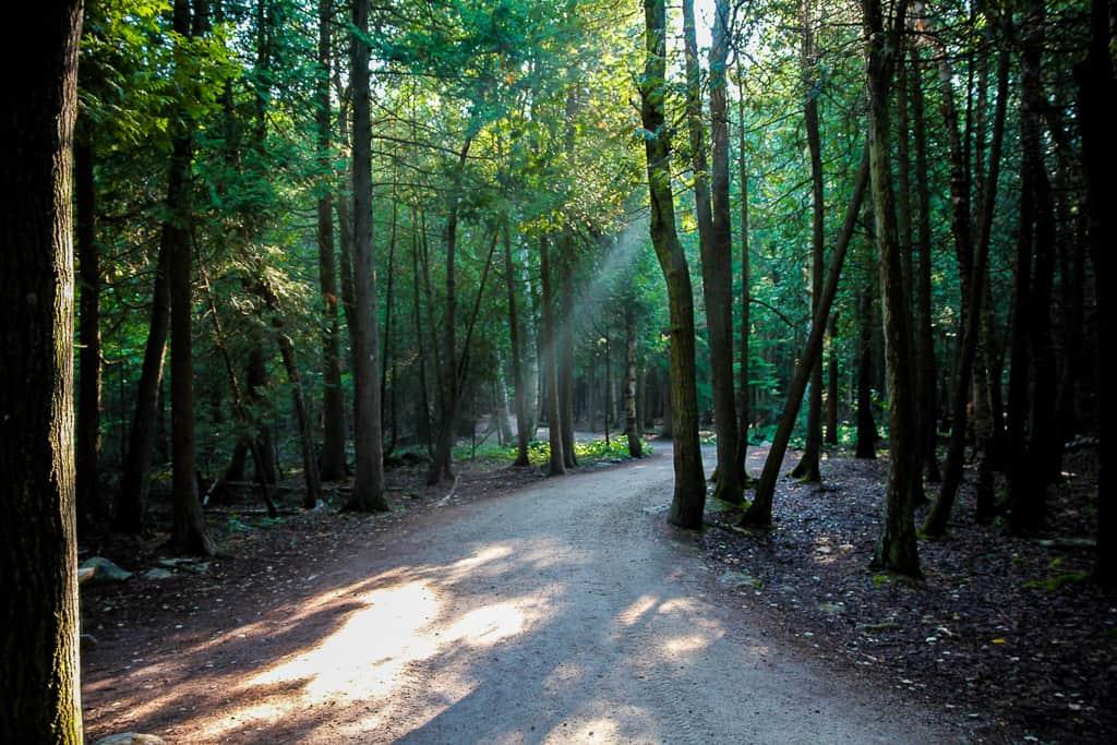 Loved the sun peeking through on the trail!