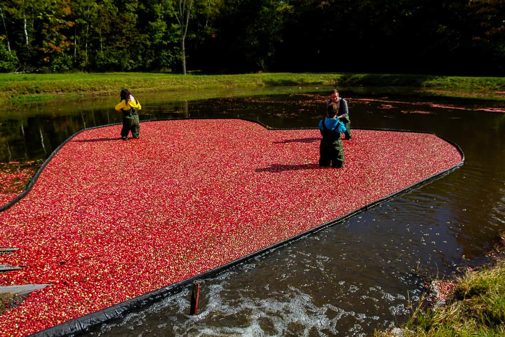 The Cranberry Plunge is one of the things to do in Ontario this fall