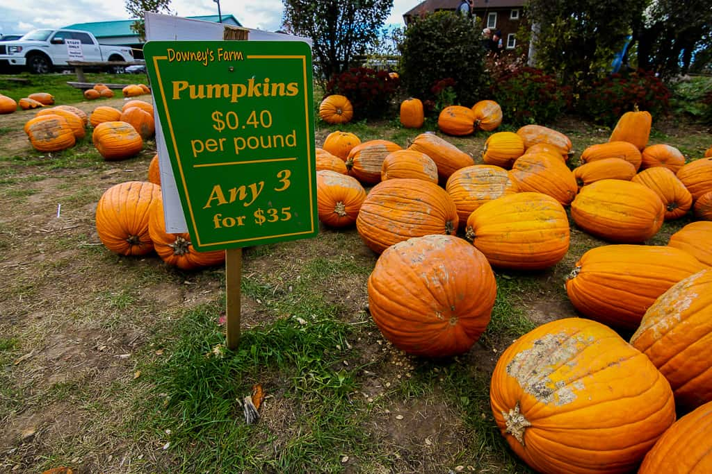 Pumpkin activities is one of the things to do in Ontario this fall