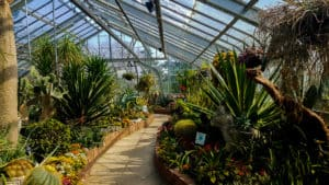 Escaping the cold in one of Toronto's conservatories is one of the things to do in Toronto this winter