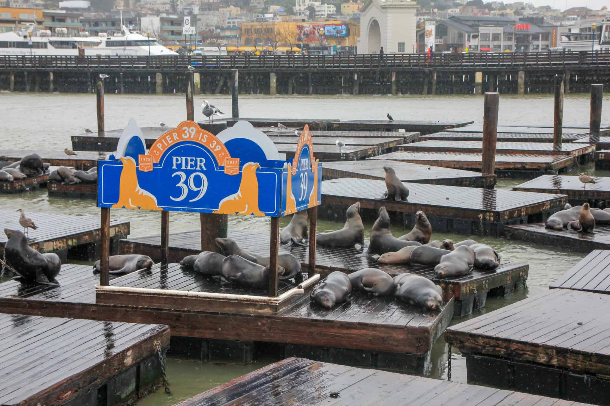 Visiting Pier 39 is an absolute must do when spending 2 days in San Francisco
