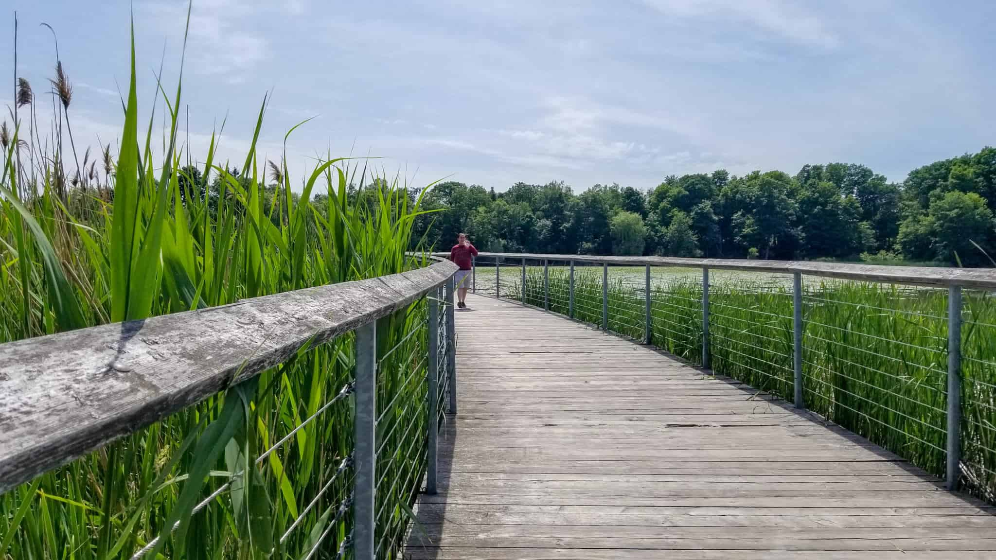 The boardwalk in Rouge Urban National Park