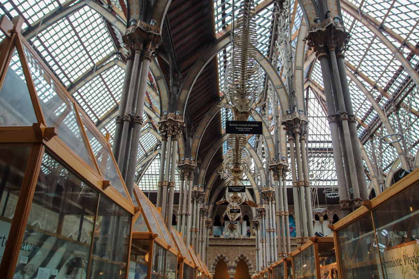 Skeletons at the Oxford Natural History Museum
